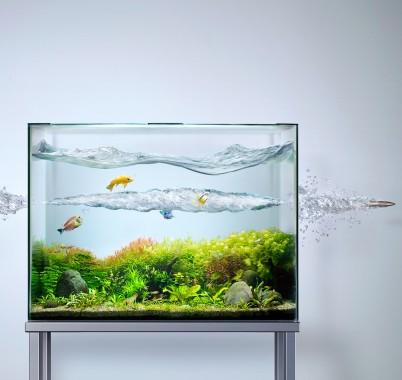 S Aquarium